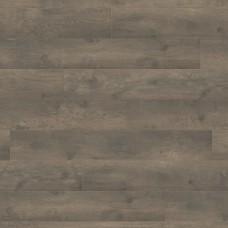 Oak Bergamo Carbon
